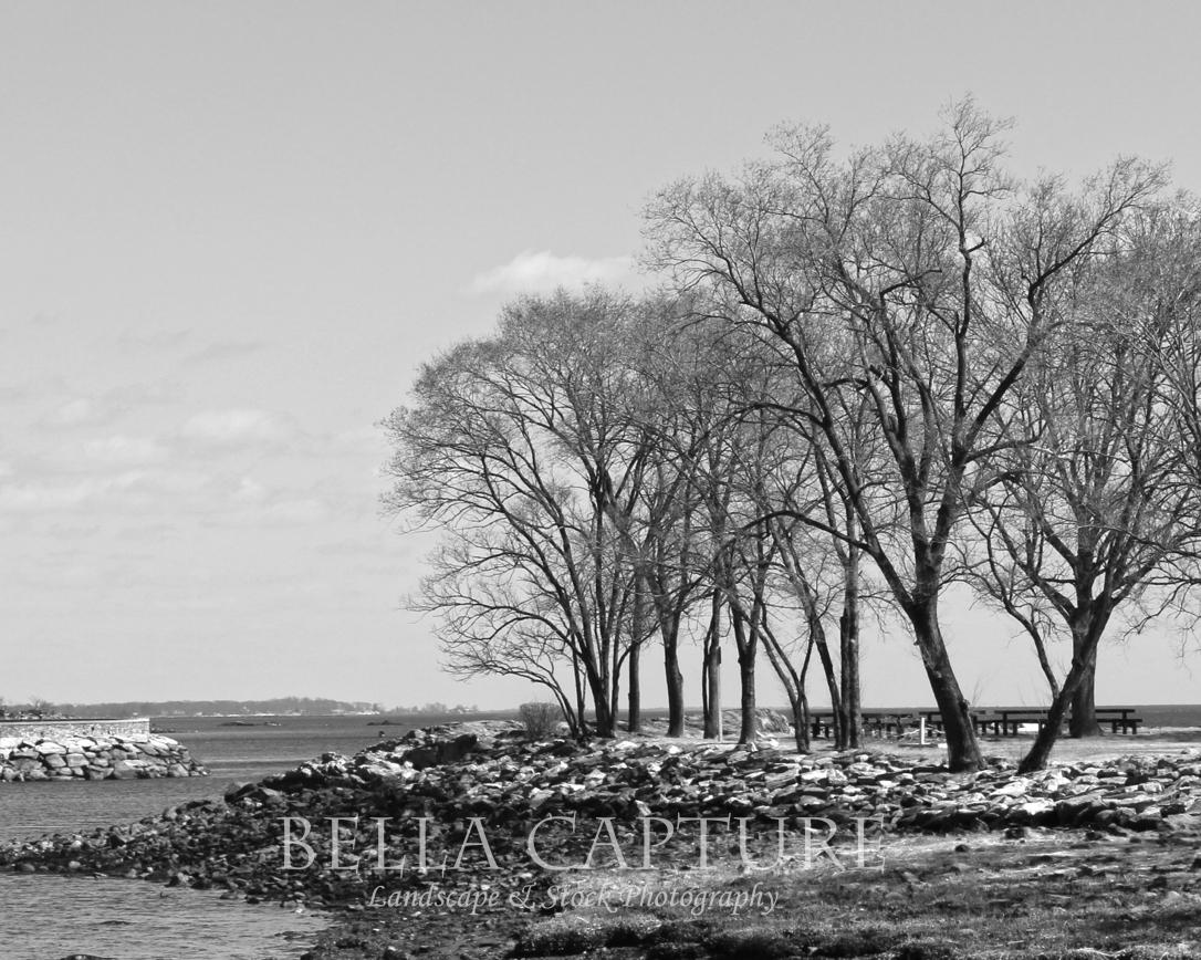 Black & White Trees on Horizon